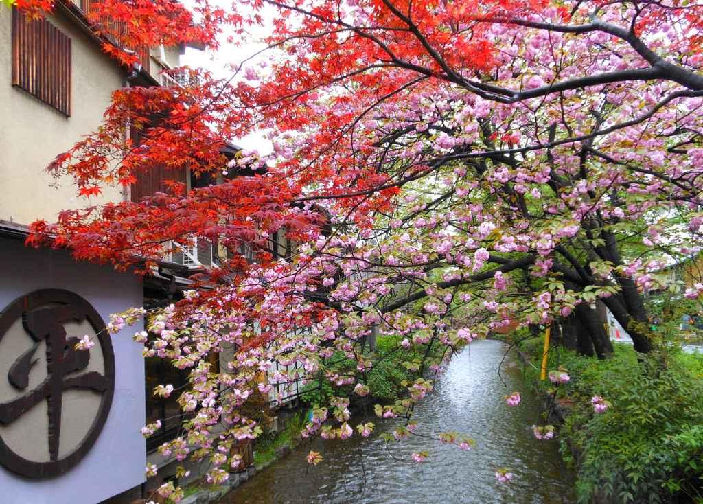 Un cours d'eau coule à l'arrière des maisons mitoyennes, Kyoto