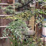 Le jardinet vise à reproduire la nature végétale à petite échelle