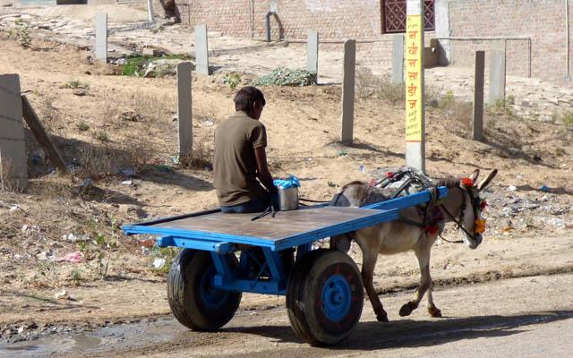 Un âne tracte un véhicule à deux roues, manoeuvré par un homme